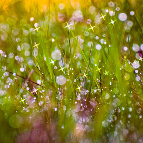 Grass rays by Adrian LUPSAN - Nature Up Close Leaves & Grasses ( grass, green, flowers, morning, spring, light, rays )