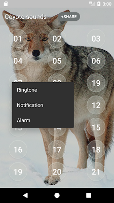 Coyote Sounds - screenshot