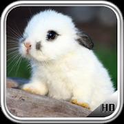 Little Rabbit Wallpaper