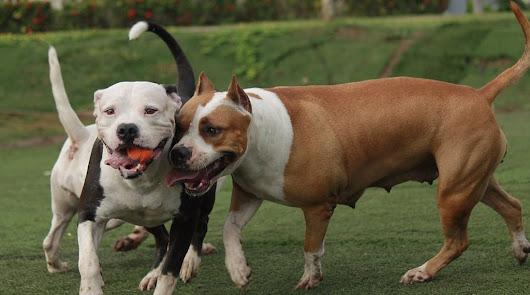Lista con las razas de perro que dejarán de ser peligrosas: así es la nueva ley