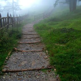 heavenly walking by Arup Chowdhury - Landscapes Prairies, Meadows & Fields