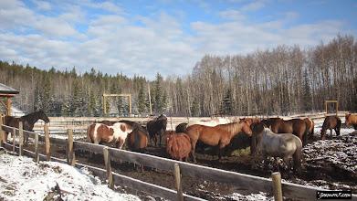 Photo: More Horsy at Moose Mountain Ranch
