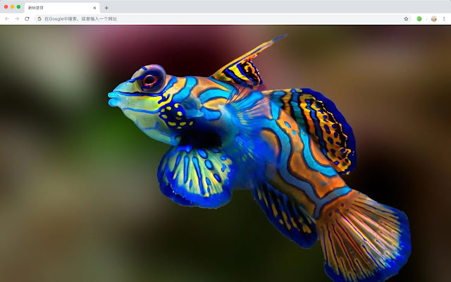 Fish HD Wallpapers New Tabs Animals Themes