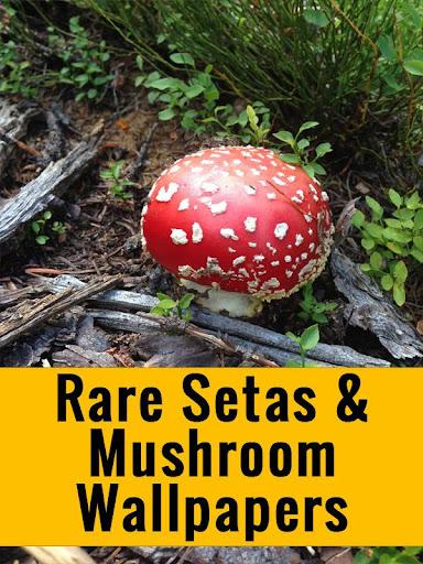 Natural Mushroom Wallpapers