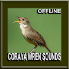 Bird Coraya Wren Sounds APK