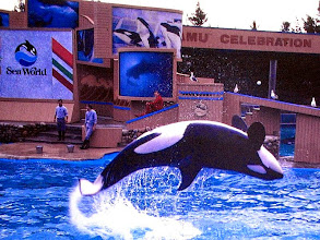 Photo: Sea World (CA)