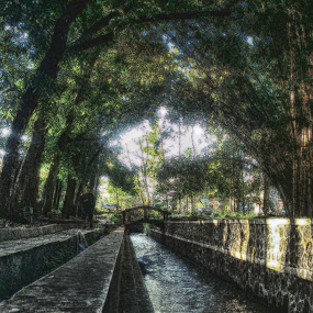 Forest by Zen Syarif Abidin - Instagram & Mobile Android
