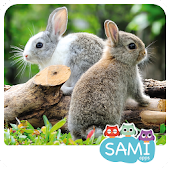 Sami Tiny Flash Cards Animals preschool kids apps