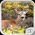 Deer Wallpapers icon