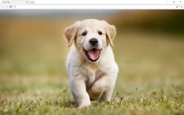 Puppy Backgrounds & New Tab