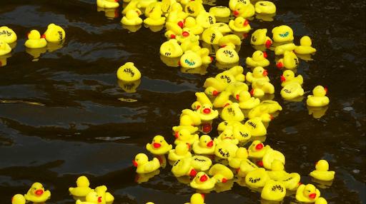Adoptez un canard à la Duck Race du Puy-de-Dôme pour soutenir L'Arche à Clermont-Ferrand !