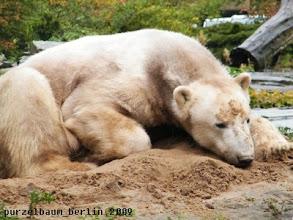 Photo: Sandbaerchen Knut relaxt auf dem Sandhaufen ;-)