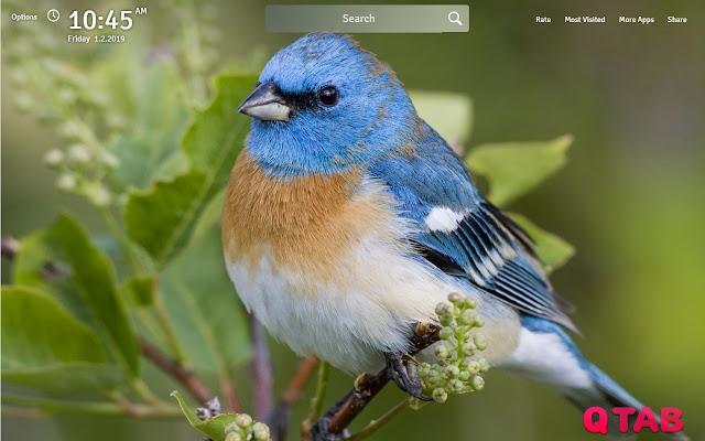 Bird Wallpapers Birds New Tab