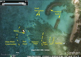 """Photo: John Lewis described the Barbados reefs in 1960.* While there has been considerable degradation of nearshore reefs since then (and even before then), his zones for the west coast fringing reefs can still be recognized, as at left, beginning inshore with the Reef Flat Zone. D-P refers to the Diploria-Palythoa zone.  The Reef Crest and Seaward Slope exhibit a Spur and Groove structure (""""parallel linear spur (ridges) of active coral growth separated by grooves (depressions) of accumulated sediment and coral debris... See:https://sites.google.com/site/coralreefsystems/videos/short-movies/reef-dynamics  Fortuitously or not, this fringing reef has a much higher proportion of healthy corals than several other sites I looked at in the MPA, including reef in the Scientific Zone and reefs just south and just north of the reef area in the Google Map at left. So the area of healthy fringing reef, perhaps 1/2 hectare altogether, appears to be quite restricted in extent and somewhat of an anomaly.  There are some new constructions onshore not yet off the ground. I hope the Barbados Government ensures that swimming pool water & sewage are not dumped into the area once they are developed. Swimming pool water in particular can be very damaging to corals because of the chlorine and algicides. Nutrients in sewage cause excessive growth of seaweeds. Nearshore sedimentation appears to be fairly well controlled in this area. ---- *Lewis, J. B. (1960). """"The coral reefs and coral communities of Barbados, W.I."""" Canadian Journal of Zoology 38 : 1133-1145.  Information about the wreck, deliberately sunk in 1985, can be viewed at: http://www.mydestination.com/barbados/travel-articles/721011/shipwrecks-of-barbados"""
