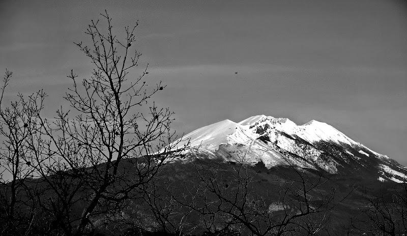 Uno sguardo ai monti attraverso rami intricati di alics
