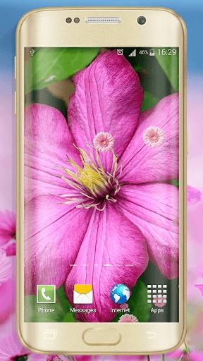 ピンクの花 ライブ壁紙