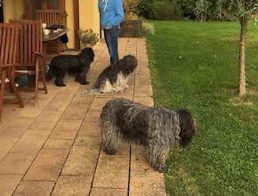 Photo: Besuch bei Danoky: die 3 'Großen' schauen erst mal zu, wie sich das 'junge Gemüse' im Garten vergnügt