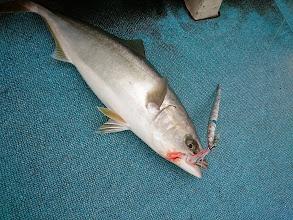 Photo: ・・・あはは。船頭さん。ヤズキャッチです。「さあー、魚いますよ!ガンバリましょー!」