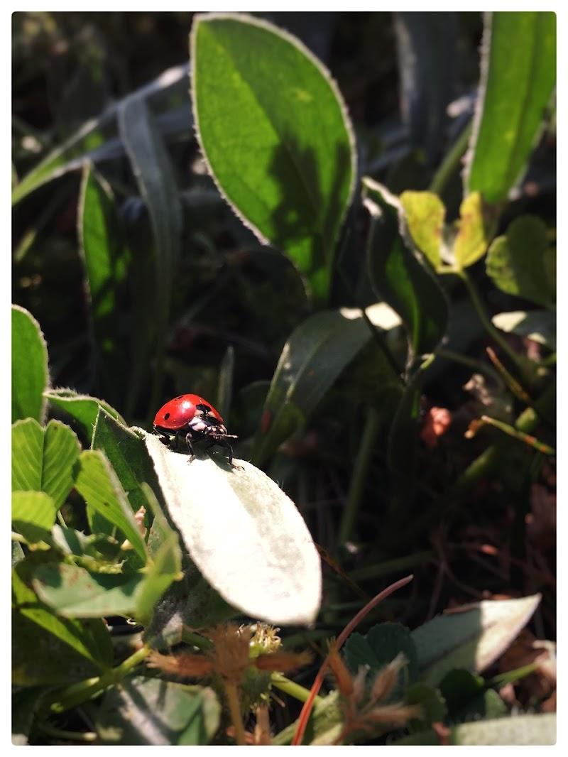 Ladybug di Romefighter