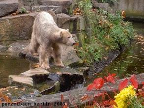 Photo: Aufmerksames Eisbaerchen Knut ;-)
