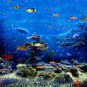 Blue Fish Tank LWP icon
