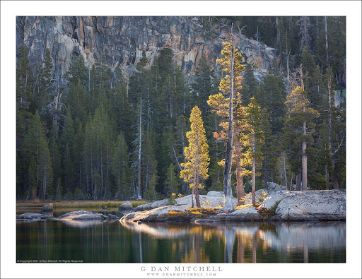 Peninsula Trees, Morning