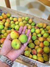 Photo: cute baby peaches
