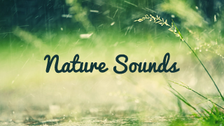 Nature Sounds - Apps on Google Play