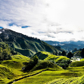 Cameron highland Malaysia by George Ting - Landscapes Mountains & Hills