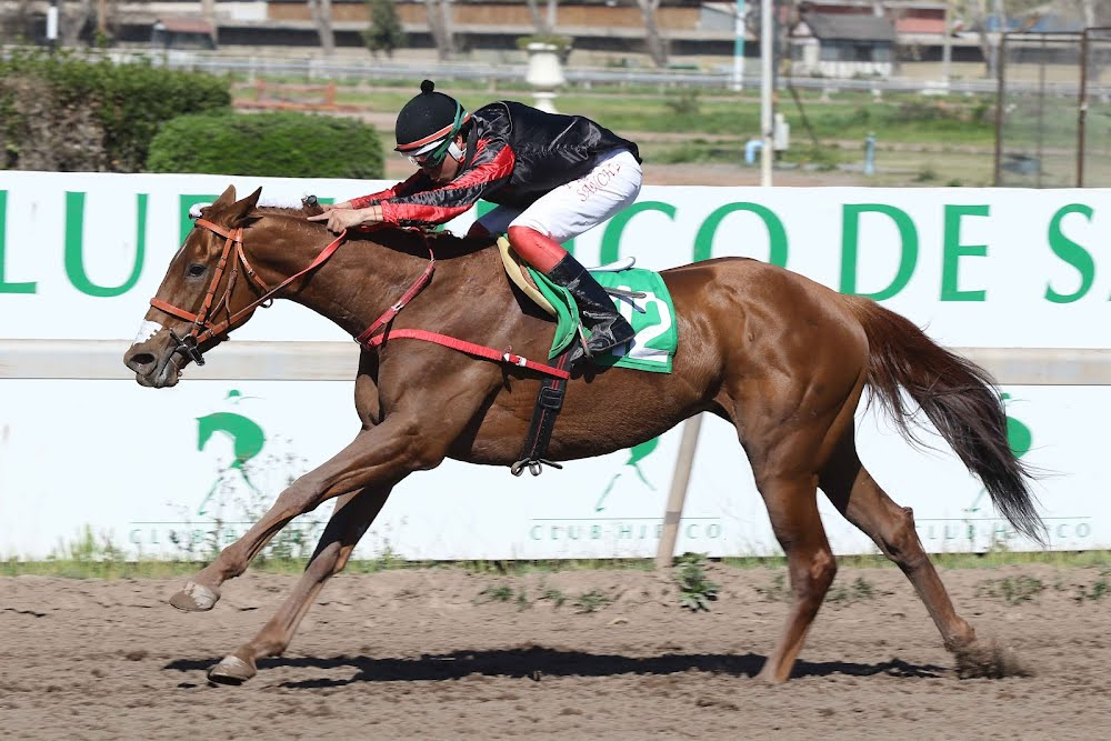 Take A Nap (Daddy Long Legs) se lleva Handicap (1000m-Arena-CHS).