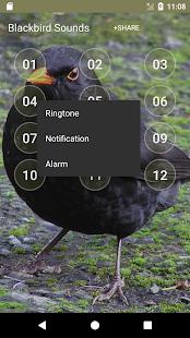 Black Bird Calls & Singing - náhled