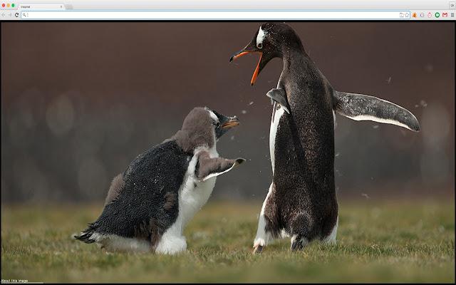 Amazing animals photos