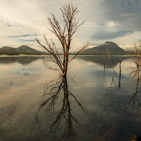 early morning reflection by David Davies - Landscapes Waterscapes ( reflection, australia, moogerah dam, sunrise, early morning )