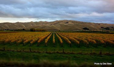Photo: (Year 2) Day 314 - Vineyards in Blenheim with Barren Hills in the Background #2