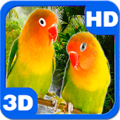 Parrots Agapornis Fischeri Bright Couple
