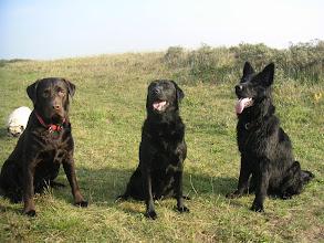 Photo: Met Dribbel, Janice en Mox naar de duinen