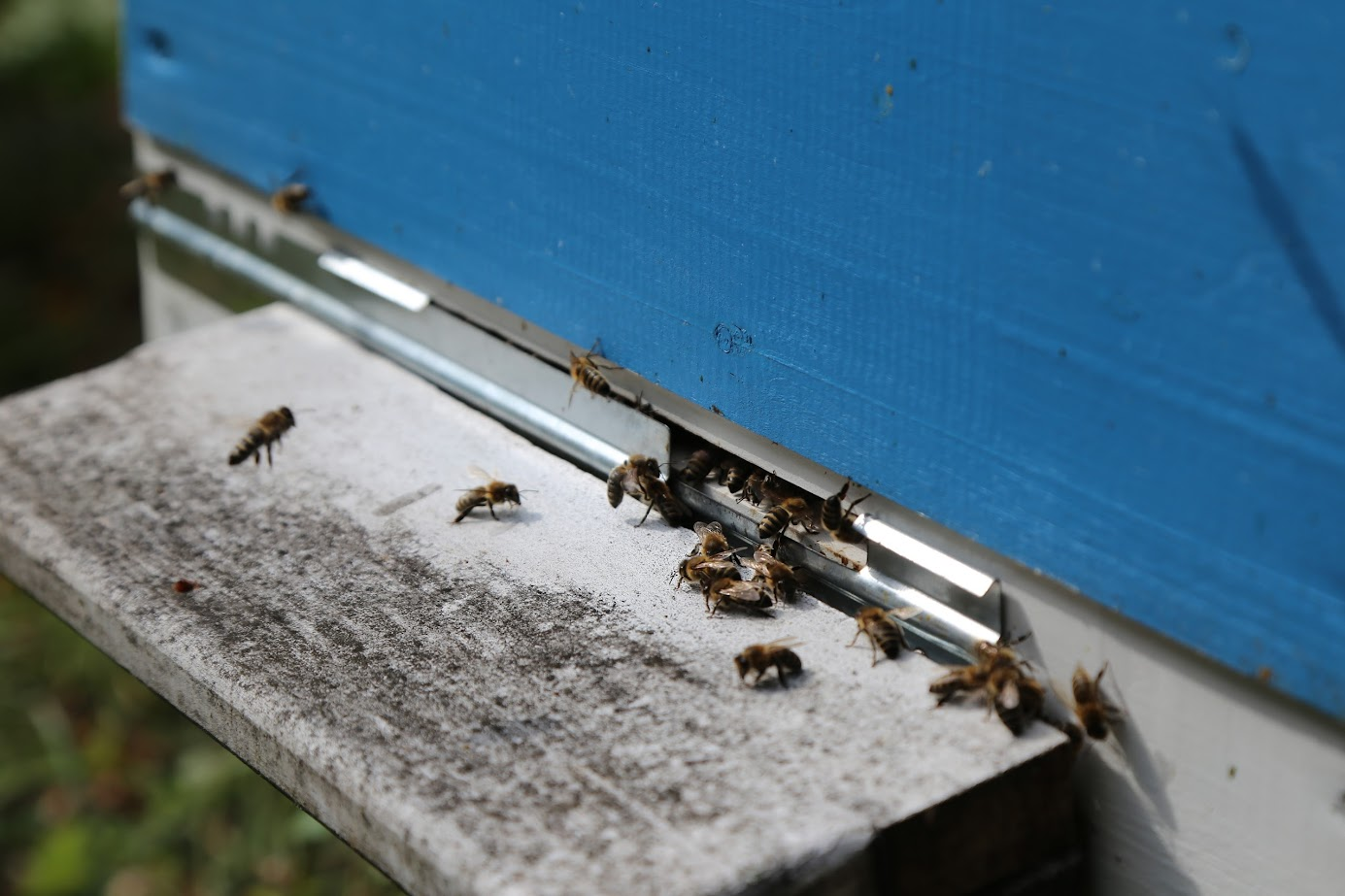 органический мед