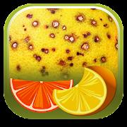 App Icon for Citrus Diseases Key App in Czech Republic Google Play Store