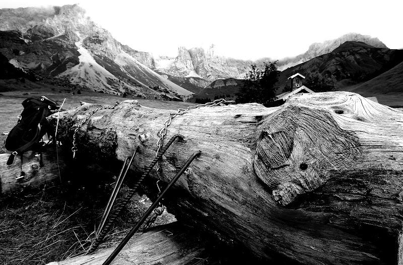 Legno in montagna di Andrea F