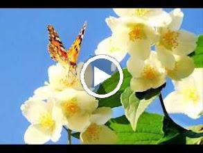 Video: A. Vivaldi  Op. 9 n. 11 - Concerto for violin, strings   b.c. in C minor (RV 198a) -
