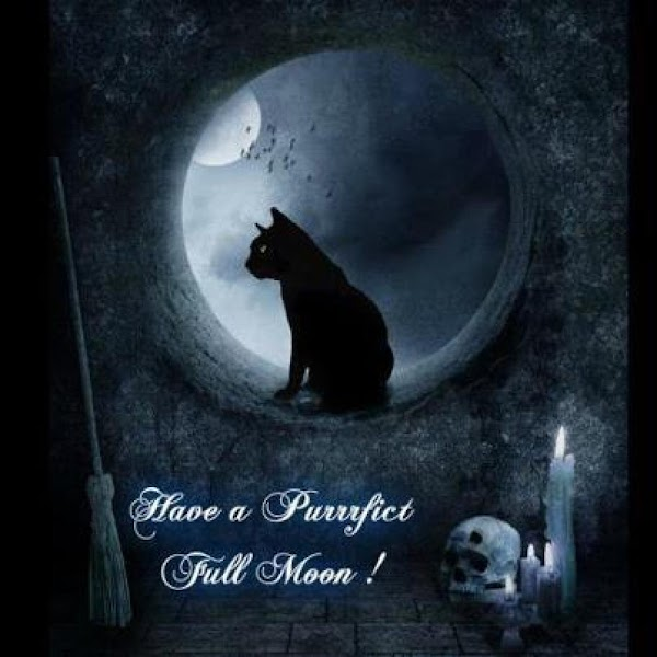 Some believe that black cats are witches in disguise, or witches reborn.