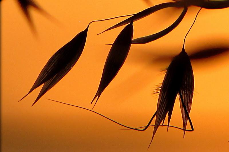 Cullate dal vento.... di Carla Roganti