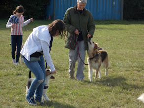 Photo: DogBasics Fun Day 2013
