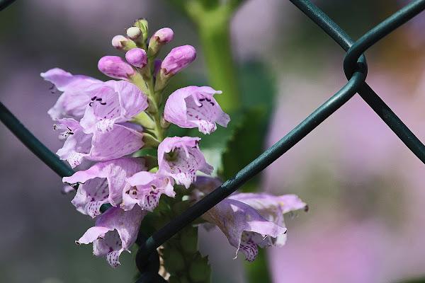 I tenui colori di maggio di Naldina Fornasari