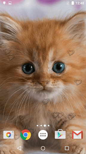 可爱的小猫 动态壁纸