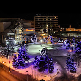 Anchorage Town Square by Patricia Phillips - Public Holidays Christmas ( anchorage alaska downtown town square christmas lights night )