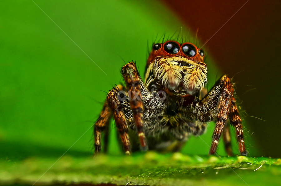 by None 5999 - Animals Insects & Spiders