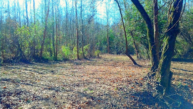 Photo: One of several trails to the creek surrounded by hardwoods.