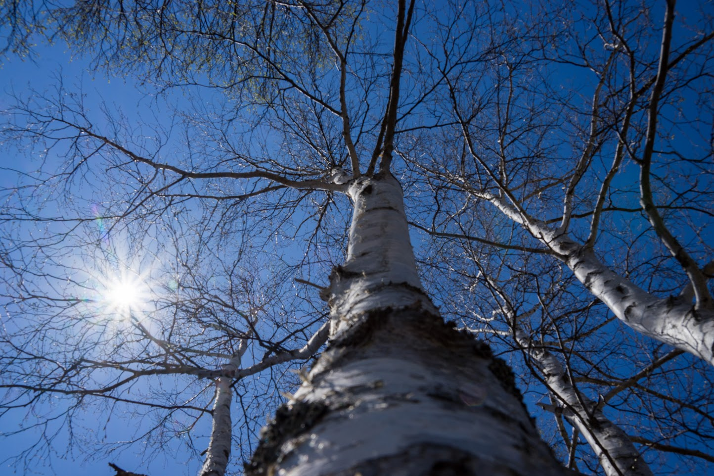 天空に伸びゆく樹木