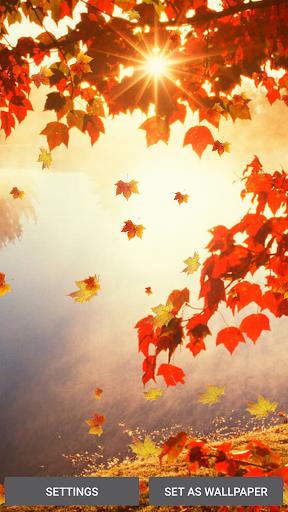 飘落 的树叶 动态壁纸